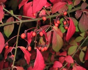 Fall Wild Berries