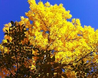 Autumn Tree - Vail, Colorado