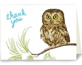 Thank You Owl on Pine Branch - Box of 8 cards