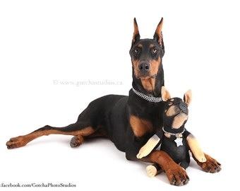 Custom Stuffed Animal - Pet Replica - Dog Gift - Cat Gift - Pet Memorial - January Delivery Date