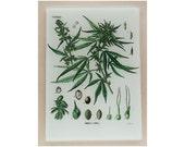 Cannabis Sativa  glass cutting board ,Marijuana  art, Marijuana glass,  cannabis  trivet, cannabis  glass art,marijuana trivet,cannabis gift