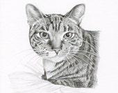 Realistic Pencil Drawing, size 4 x 4, Custom Pet Portrait, Custom Pet Drawing, Cat Art, Dog Portrait, Dog Pencil Drawing, Graphite, Pet Art