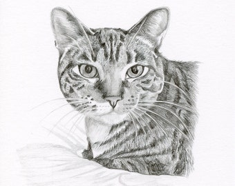 Realistic Pencil Drawing, size 4 x 4 OR 5 x 5, Custom Pet Portrait, Custom Pet Drawing, Cat Art, Dog Portrait, Dog Pencil Drawing, Graphite