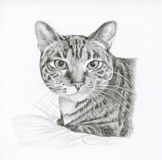 Realistic pencil drawing size 4 x 4 or 5 x 5 custom pet for Disegno gatto facile