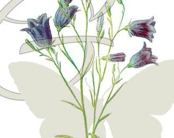 Digital Flower Download Illustration Wildflower Printable Clip Art Botanical Art