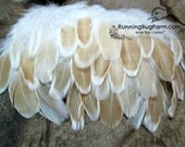 """Real Feathers Natural Feathers Loose Feather For Crafts Ready To Ship Buff Laced Polish Hen Feathers Real Bird Feathers 25 @ 3 - 3.5"""" / 2378"""