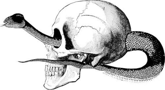 human skull printable art skeleton art human Anatomy skull clip art vector skeleton clipart download skull png clip art snake illustration