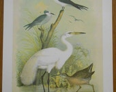 Great White Egret Vintage Bird Print from Studer's Birds by Theodore Jasper, vintage wall decor