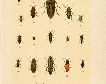 Antique Beetle Prints - Set of Three Prints - 1912 Vintage Prints - Set 4 - Nos. 5, 8, 10