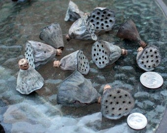 Lotus Pods-2 sizes available-Tiny or Small lotus pods-Botanical-Miniature pods-Bag of 12 pods