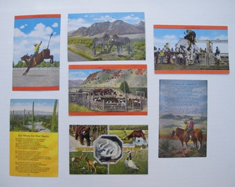 NOS Vintage Western Southwest Cowboy Rodeo POSTCARD Collection /  Bull Horse Bronco EC Kropp Set of Seven