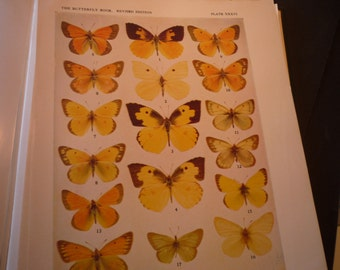 Butterflies - 2 Gorgeous plates Parnassius and Eurema - 1945 color plate - yellow and orange - vibrant color prints - framable W J Holland
