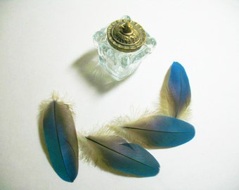 """Natural Parrot Feathers, Supply, Feather Supply, 4 Blue and Gold Macaw Feathers~4"""""""