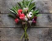 Balsam Impatiens // Garden Balsam // organic heirloom // from our farm // spring garden // for the cottage garden // flower gardening