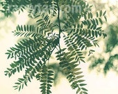 Nature Photograph, Green, Leaf Print, Beige, Neutral Wall Art, Botanic Print, Spring 12x12 Print Ikea Ribba