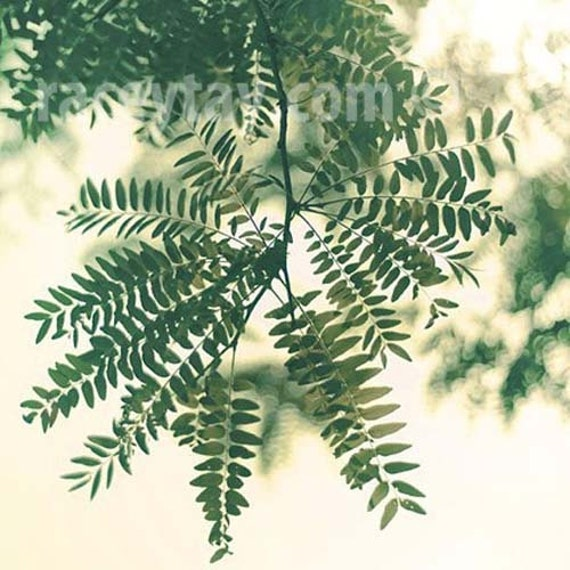 Nature Photograph, Green, Leaf Print, Beige, Neutral Wall Art, Botanic Print, Spring 12x12 Print Ikea Ribba