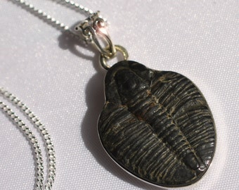 A Moment in Time - Beautiful Natural Trilobite Fossil Sterling Silver Necklace