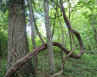 Deep Woods Digital Download Art