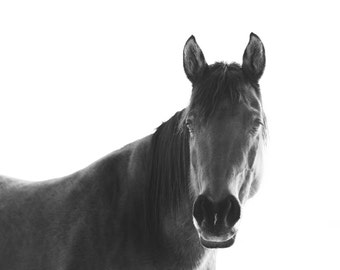 Horse with White Background, Black and White Horse Photography