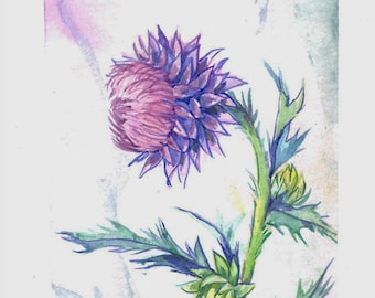 Thistle Watercolor