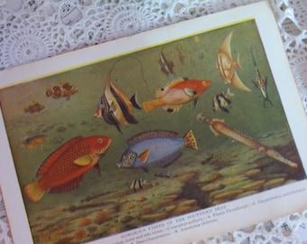 Reference-Audubon-Book Plates-FISH