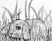 Original Pencil Drawing - Bunny 41
