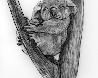 Original Pencil Drawing - Koala 40