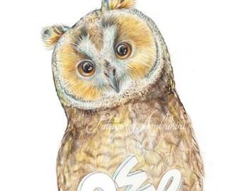 Original 8x10 Watercolour OWL    nOT A pRINT ..Original Painting, animal ,fine art, moon, owly, bird, night