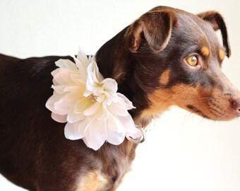 Wedding flower with rhinestone Dog white satin collars for ring bearer Female dog collar, dog wedding, Metal buckle upgrade available