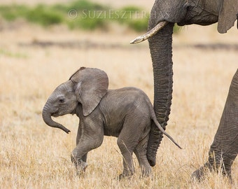 BABY ELEPHANT PHOTO Print, Baby Animal Photograph, African Wildlife Photography, Wall Decor, Safari Nursery Art, Kids Room Decor, Cute, Zoo