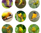 "Digital Art Printable, Yellow Bird, Nature, Instant Download, Digital Collage Sheet, For Pendant, 1.5"", 1.25"", 1"", Circles, dcc036"