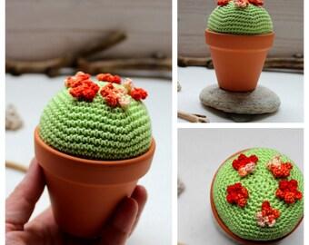 Cactus little orange flower ( Succulent garden)