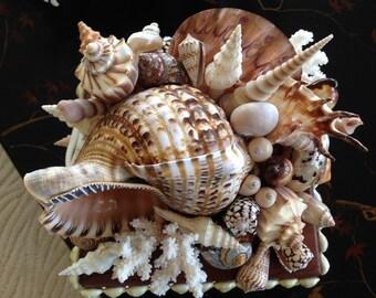 Gorgeous Seashell Box