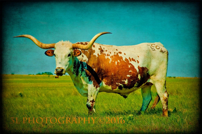 western photography southwestern home decor texas longhorn