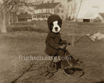 Boston Terrier Art Anthropomorphic Dog on Bicycle Mixed Media Collage 8.5 x 11 Inch Print