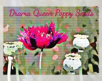Drama Queen Poppy Flower Seeds