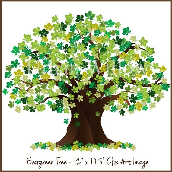 Evergreen Clipart Tree, Tree Graphic, Green Tree, Oak Tree Graphic ...