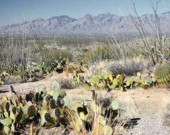 Desert Photography Print 12x18 Fine Art Arizona Saguaro Cactus Mountains Southwest Winter Landscape Photography Print.