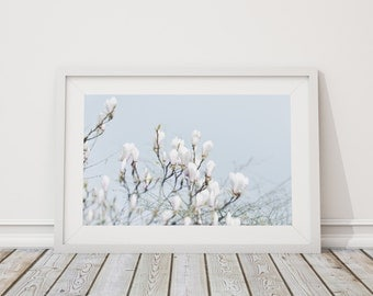 Magnolia ~ Fine art Photography, Whimsical, Poise, Spring, Shabby Chic, Vintage
