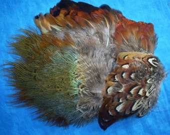 Variety of Ringneck pheasant feathers. More than 60. #7