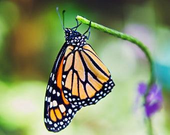 nursery art, butterfly photography, butterfly art, nature photography, butterfly print, nursery decor, butterfly decor, orange home decor