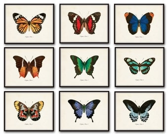 Papillon Butterfly Print Set No.12, Vintage Butterfly Prints, Giclee, Illustration, Natural History Art, Collage, Gallery Wall Art