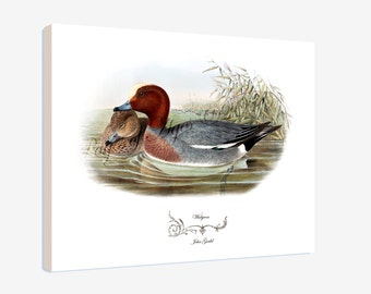 """Canvas Print - Widgeon by John Gould (1804-1881) - 16"""" x 20"""" - On Stretched Canvas"""
