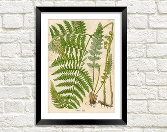 FERN PLANT PRINT: Vintage Botany Art Illustration Wall Hanging (A4 / A3 Size)