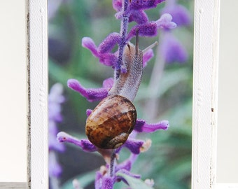 Snail in Mexican Sage Photo Greeting Card, Climbing Snail in Plant, Fine Art Photography, Image from the Garden, All Occasion Card
