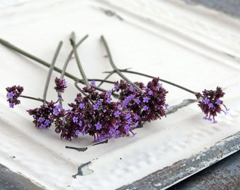 Verbena Seeds, Verbena bonariensis, Wildflower Seeds, Great for Butterfly Gardens, Meadow Garden Seeds, 100+ Seeds From this Year's Crop