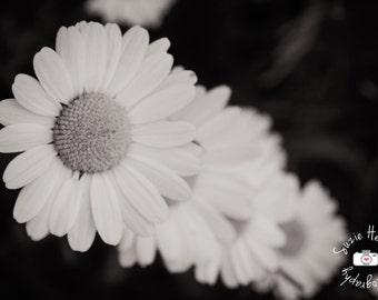 Daisy Original Black and White Print