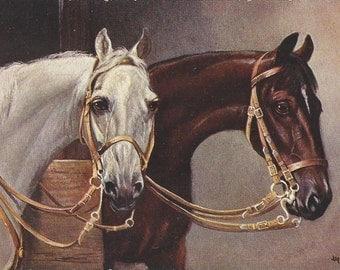 Grey & Bay - Antique 1900s Artist-Signed Bridled Horses Postcard
