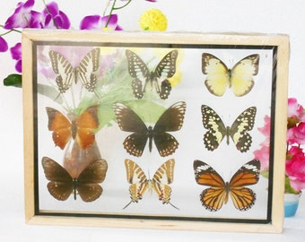 REAL mixed BUTTERFLIES Taxidermy Double Glass in Frame /M90Y