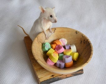 Taxidermy mouse with hand turned wood bowl